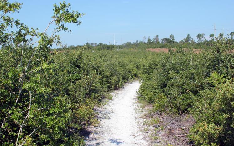 Trail in Lyonia Preserve